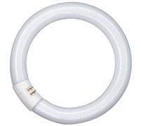 TL-E CIRCULAR SUPER 80 PRO 22W/ 840 G10q d26xD216 PHILIPS -лампа
