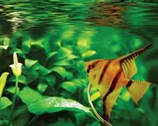 AQUASTAR LED MINI 12W 1140lm для акв. 300mm - LED светильник для аквариума SYLVANIA